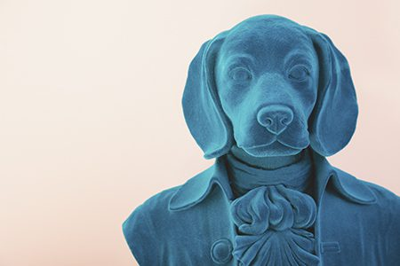 St Marks Stays Quirky Dog Bust